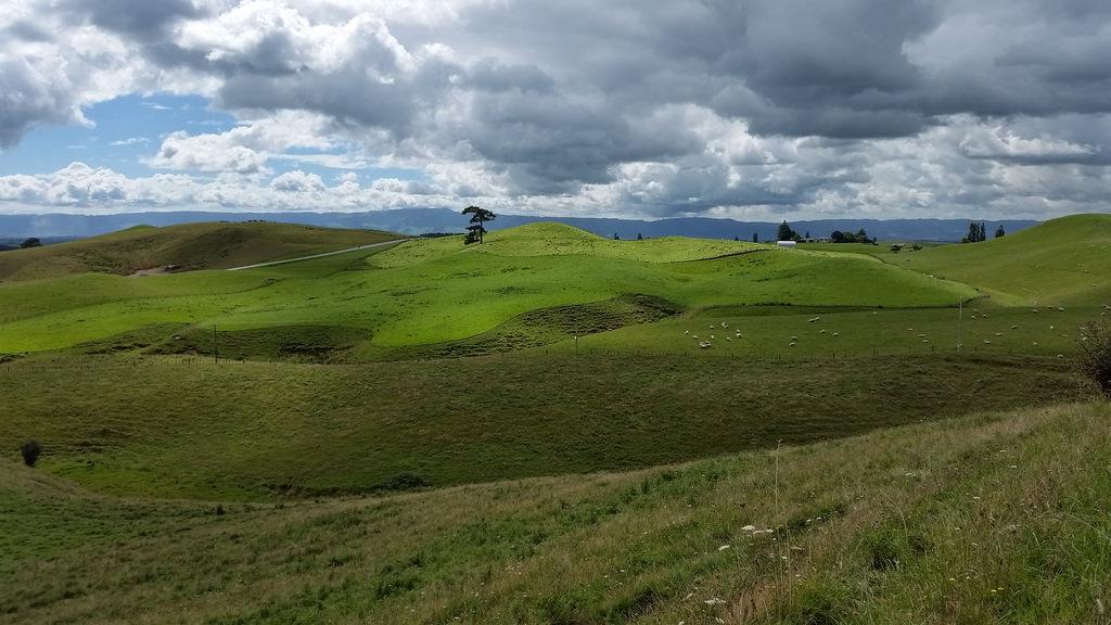 NZ-north62