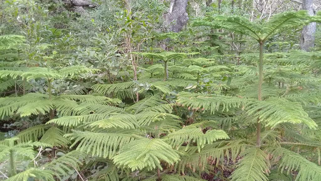 Forest-IleofPines28654488957
